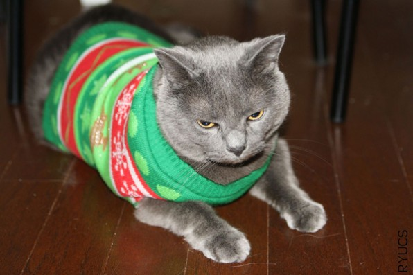 https://www.google.com/search?q=ugly+christmas+sweater&biw=1440&bih=754&source=lnms&tbm=isch&sa=X&sqi=2&ved=0CAcQ_AUoAmoVChMI96bh0o30xgIVFVuICh3erwiu#imgrc=_NyviQTgYco3fM%3A