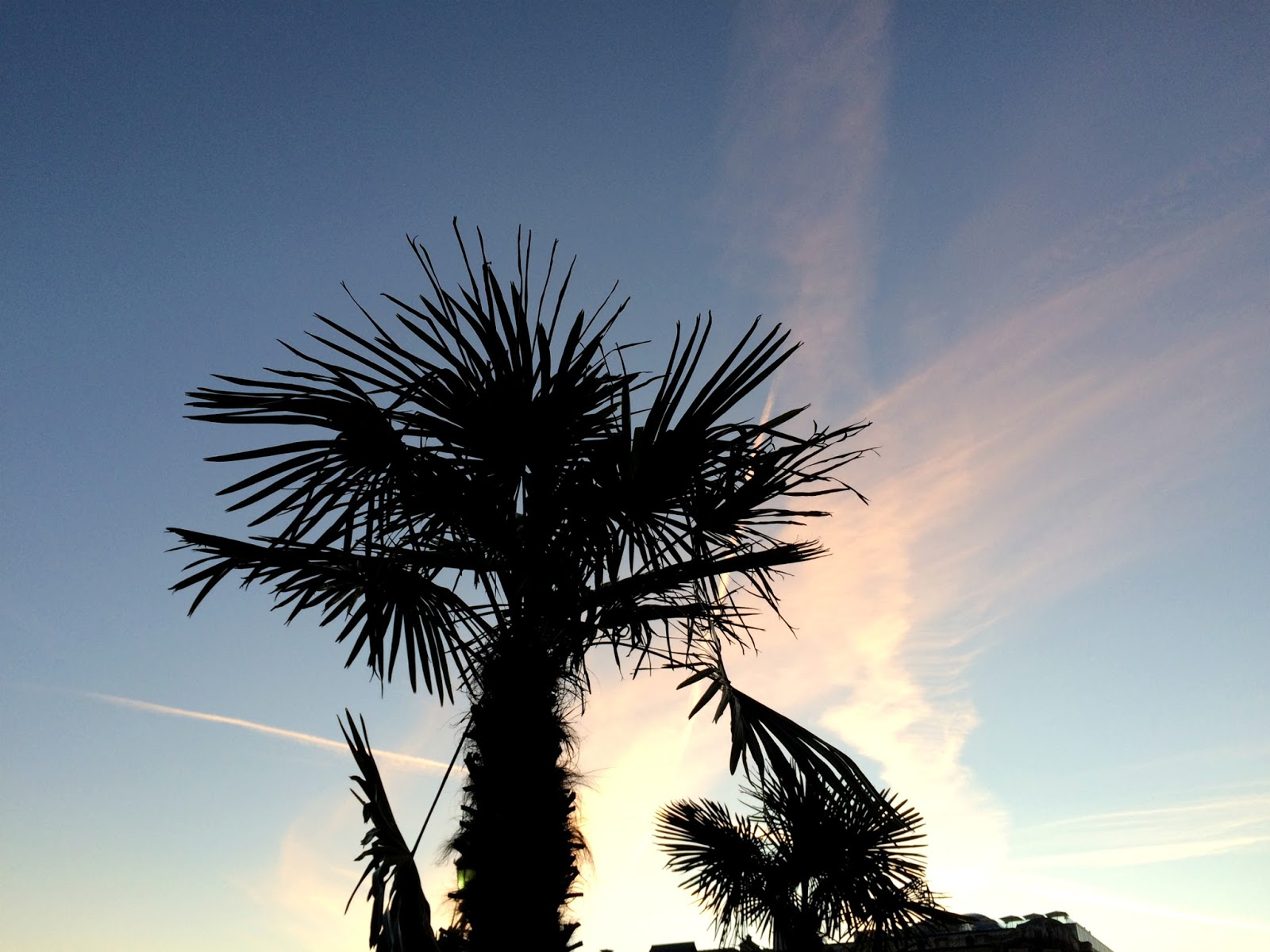 Palms | Sunset