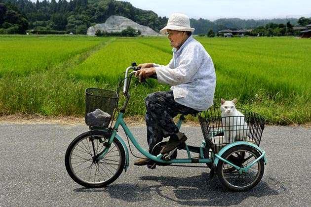 historia japonesa amistad: