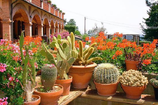 Arte y jardiner a cactus el desierto en casa for Jardines con cactus y piedras