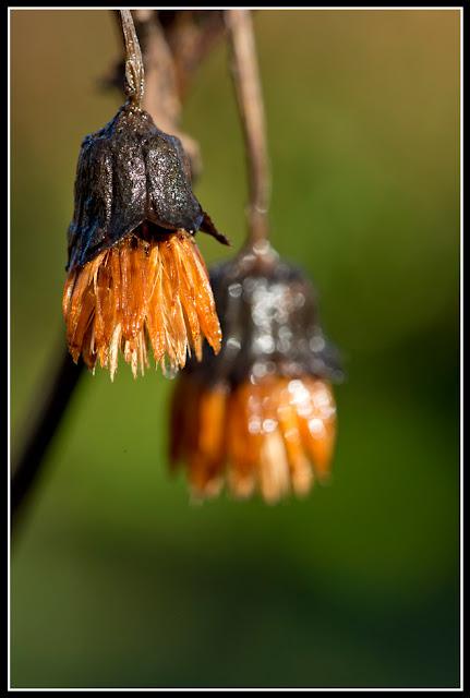 Nova Scotia; garden