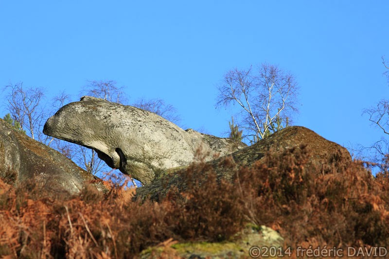 nature végétation rocher baleine cachalot forêt Fontainebleau Seine-et-Marne