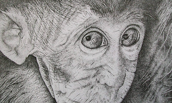 Baby Macaque, dot (ink)