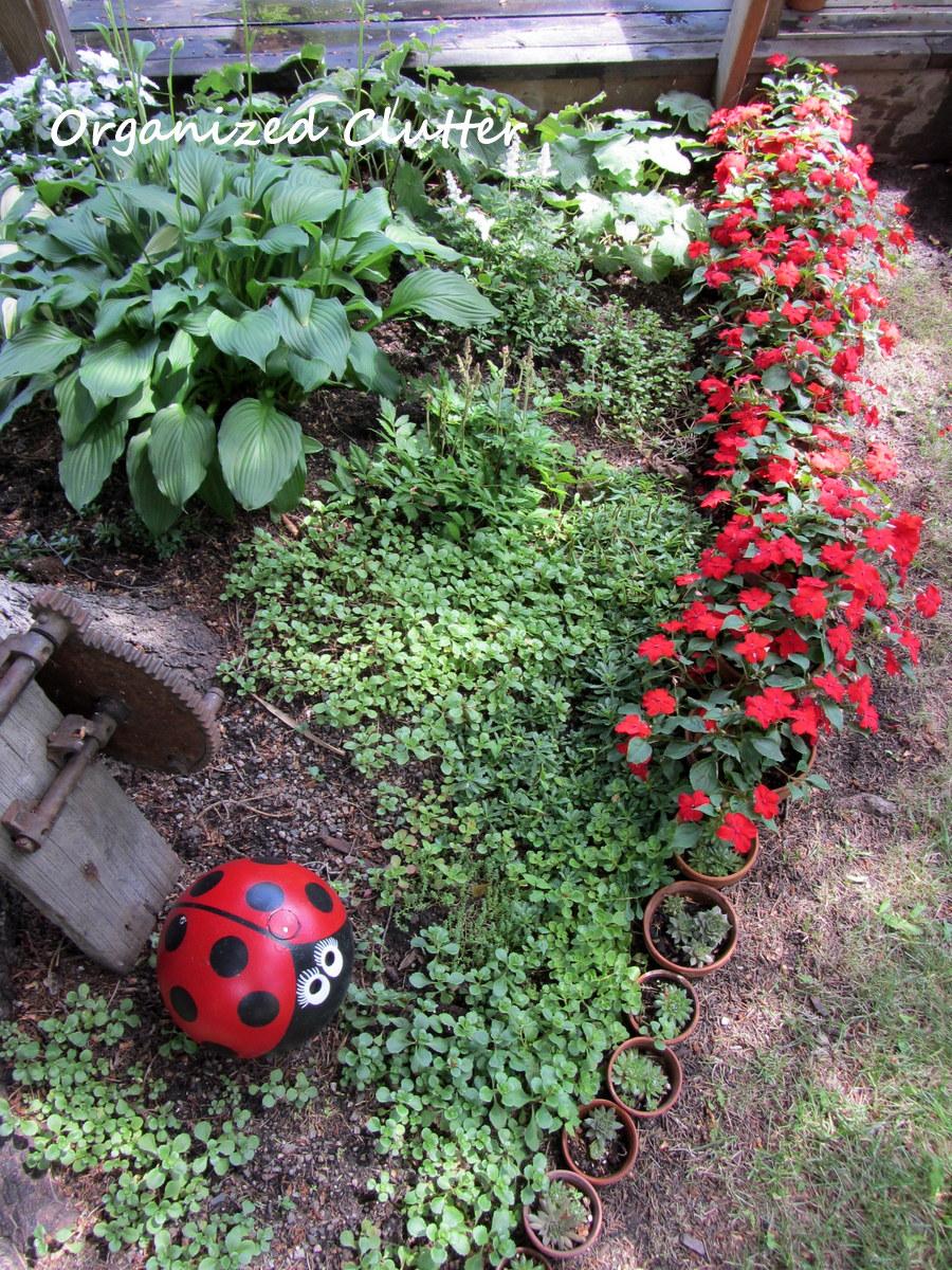 Flower garden ideas for under a tree - Planting Under A Spruce Tree Another Terra Cotta Pot Edging