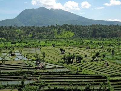 North of Tirta gangga rice terrace