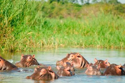 Hippo-Pod