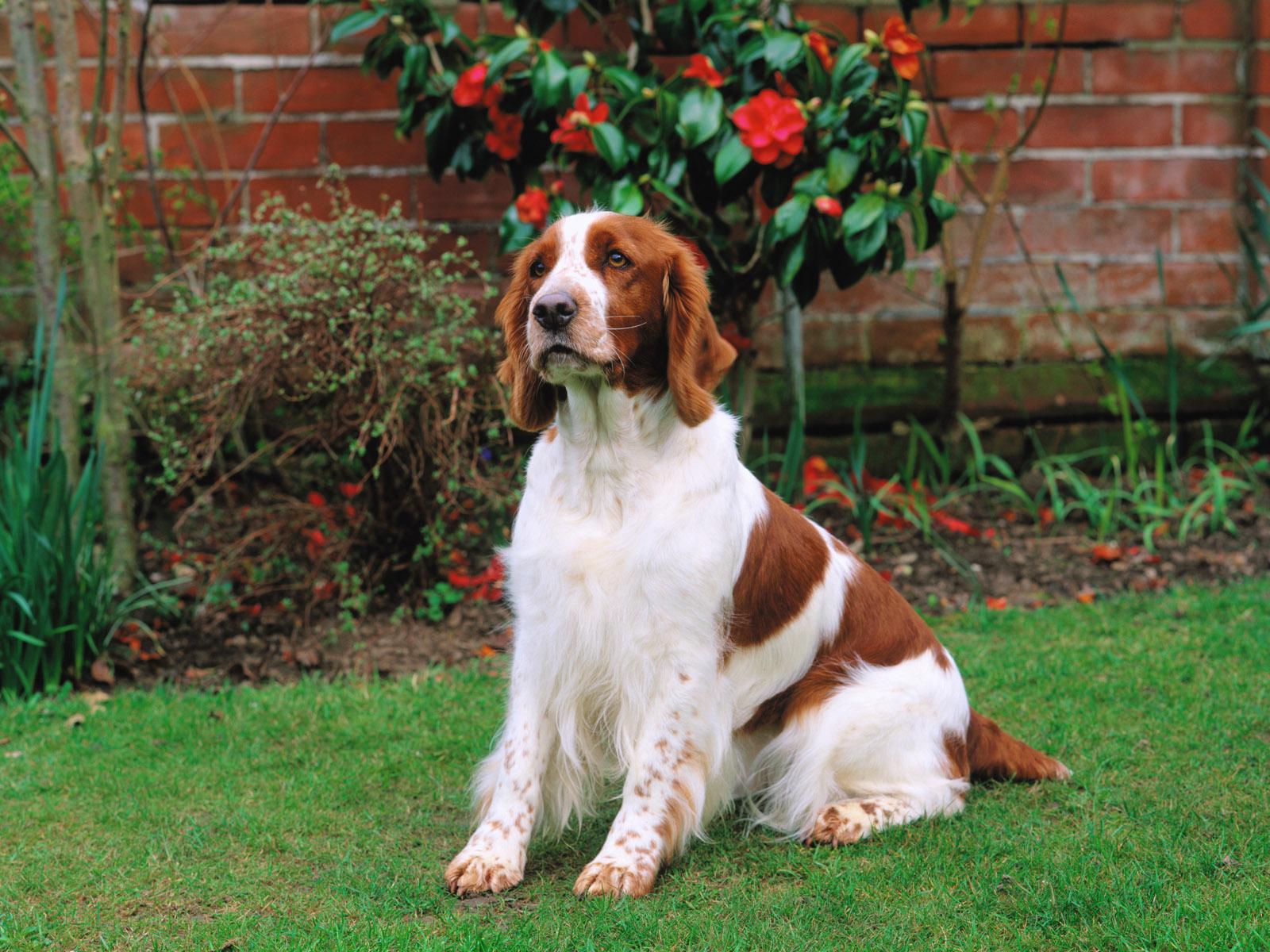 15 fotos en hd de perros tiernos para descargar