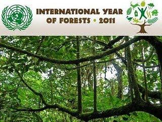 國際森林年