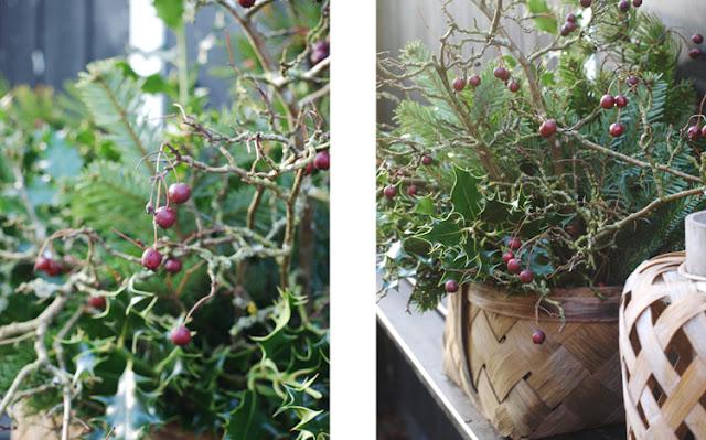 Spånkurv med gran, kristjørn og røde bær