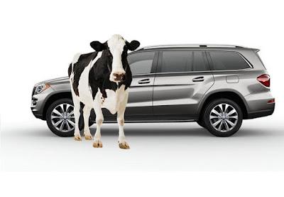 Um jipe e 1 vaca