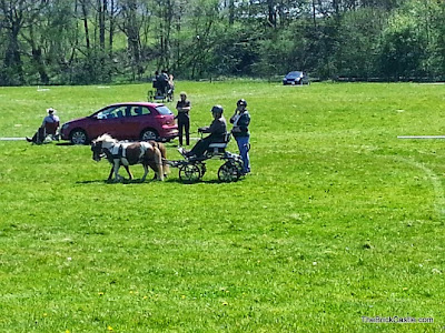 Shetland Ponies Carriage Driving event dressage