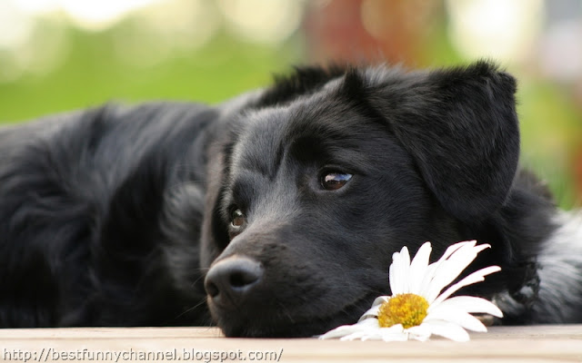 Cute black dog.