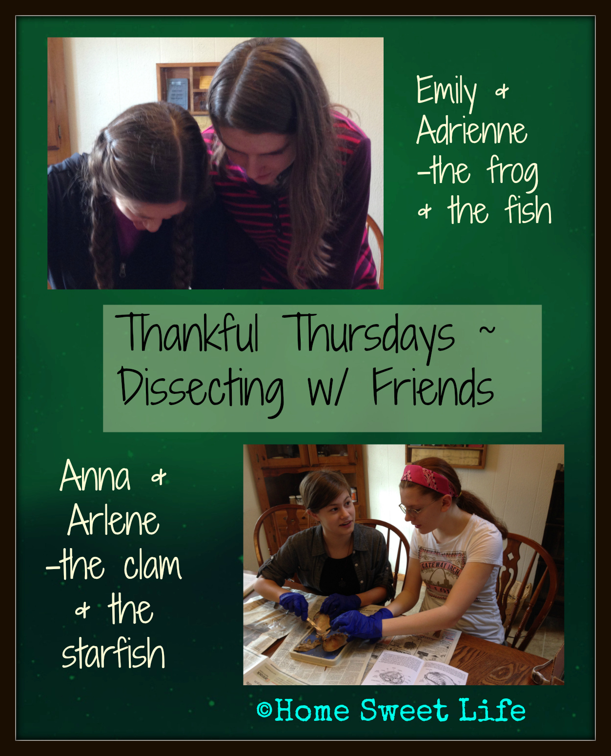 Thankful Thursdays - Dissection