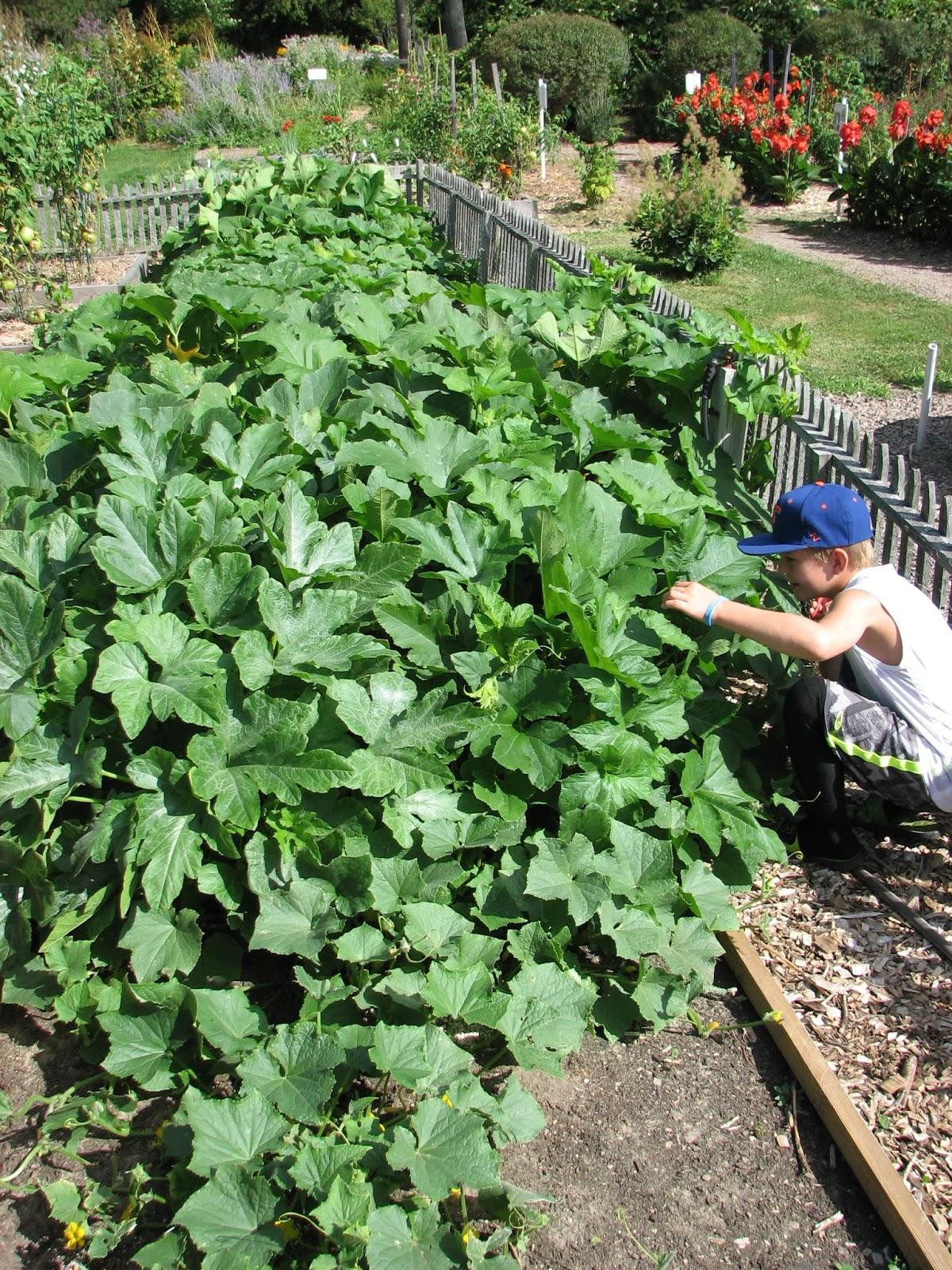 Growing young gardeners harvesting f u n south for The gardener burlington
