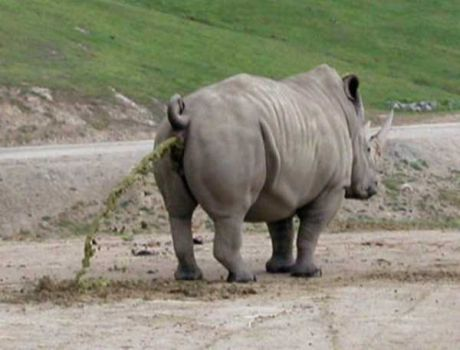 Rhino funny