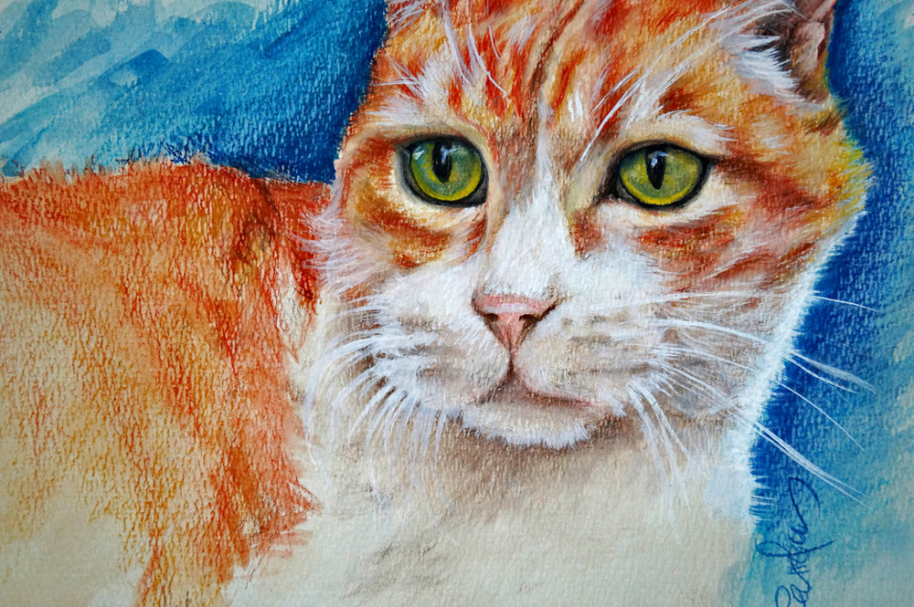 gato-parcial-dibujo-carolum-art