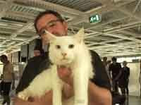 Making-of anuncio de Ikea Inglaterra con 100 gatos