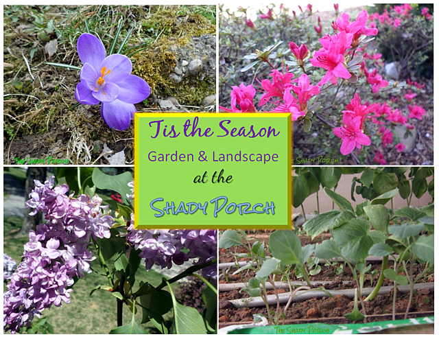 Tis the season...to garden & landscape