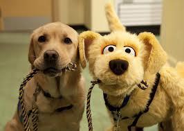 Similar, real dog and stuffed dog