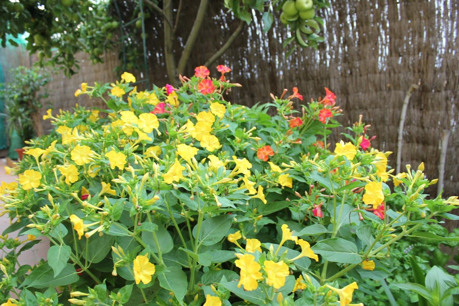 Flores y plantas de jardin car interior design - Plantas y jardin ...