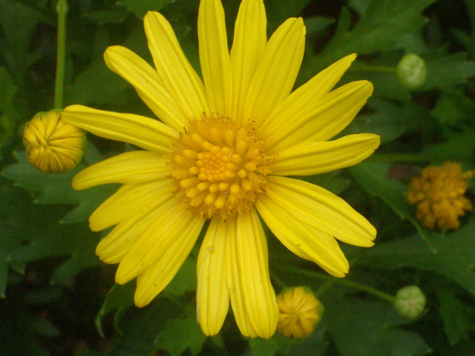 Eileen first interest beautiful plants and flowers yellow flower taken on june 10 2011 along harrison road baguio city mightylinksfo