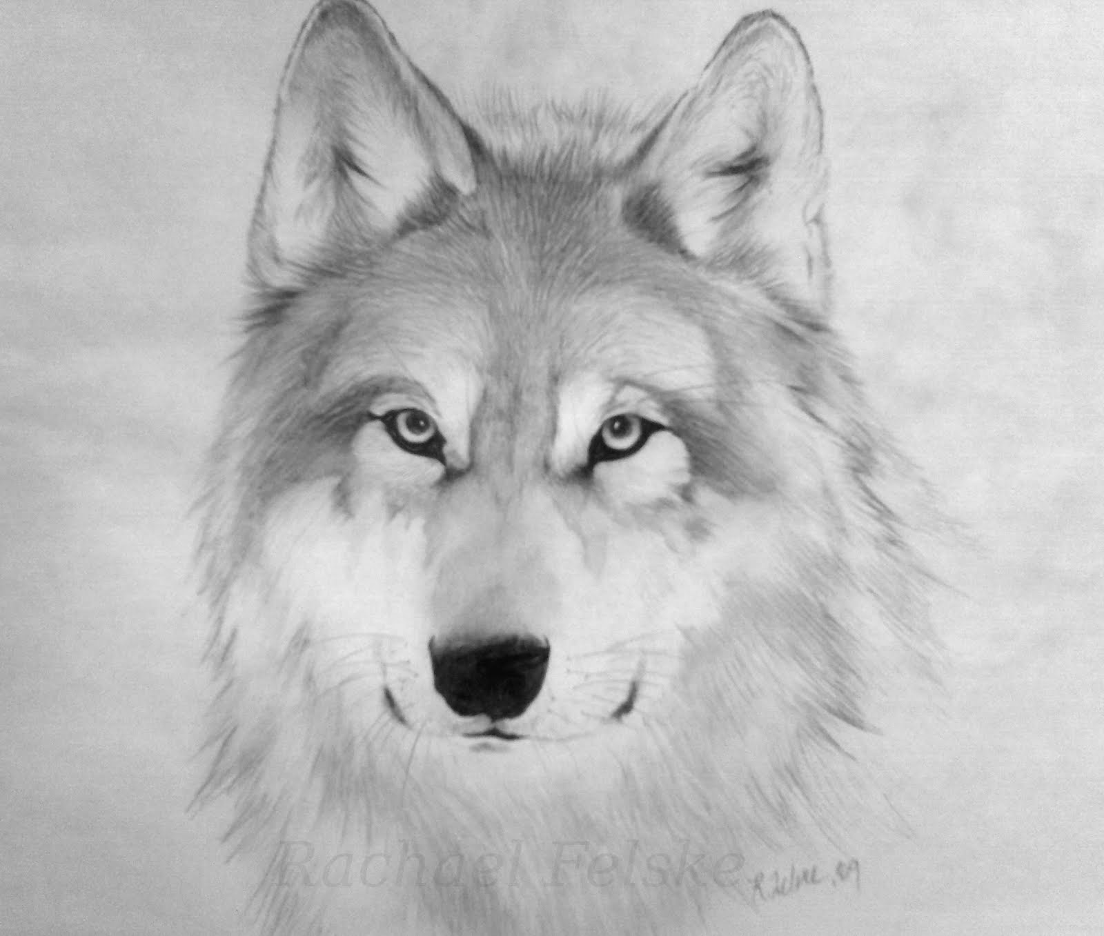 Wolf Drawing 3d Drawing