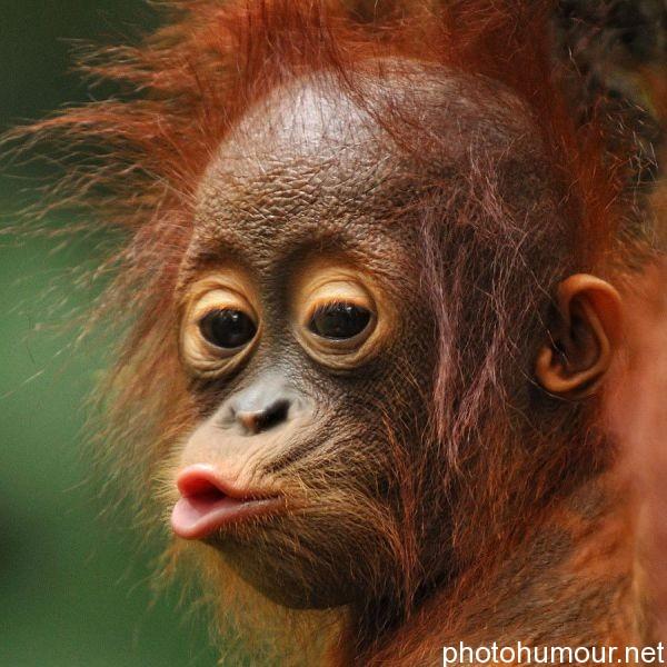 Image drôle animaux  Les meilleurs blagues  Blague.lol