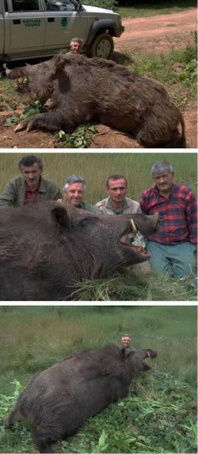 Foto hewan hewan unik