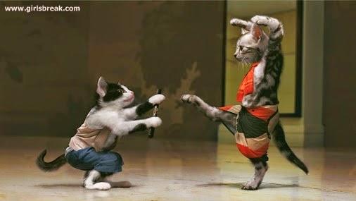Let's do a martial arts training