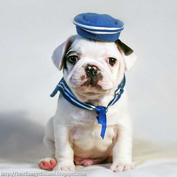 dog sailor