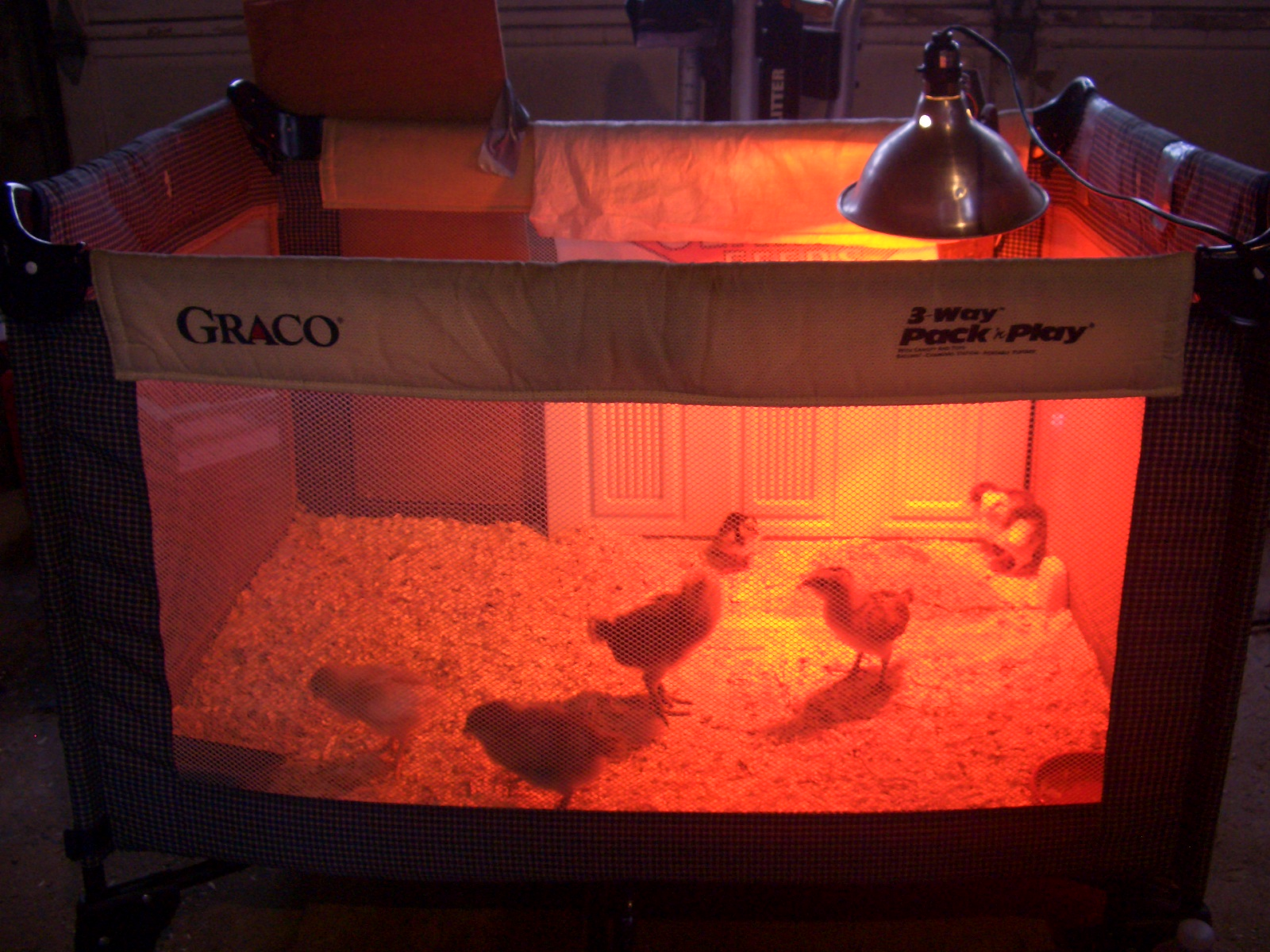 ... Of The Heat Lamp. The Play Pen Is Working Perfectly And Will Hopefully  House The Chicks Until They Are Old Enough To Be Moved In Permanently With  Lizzy.