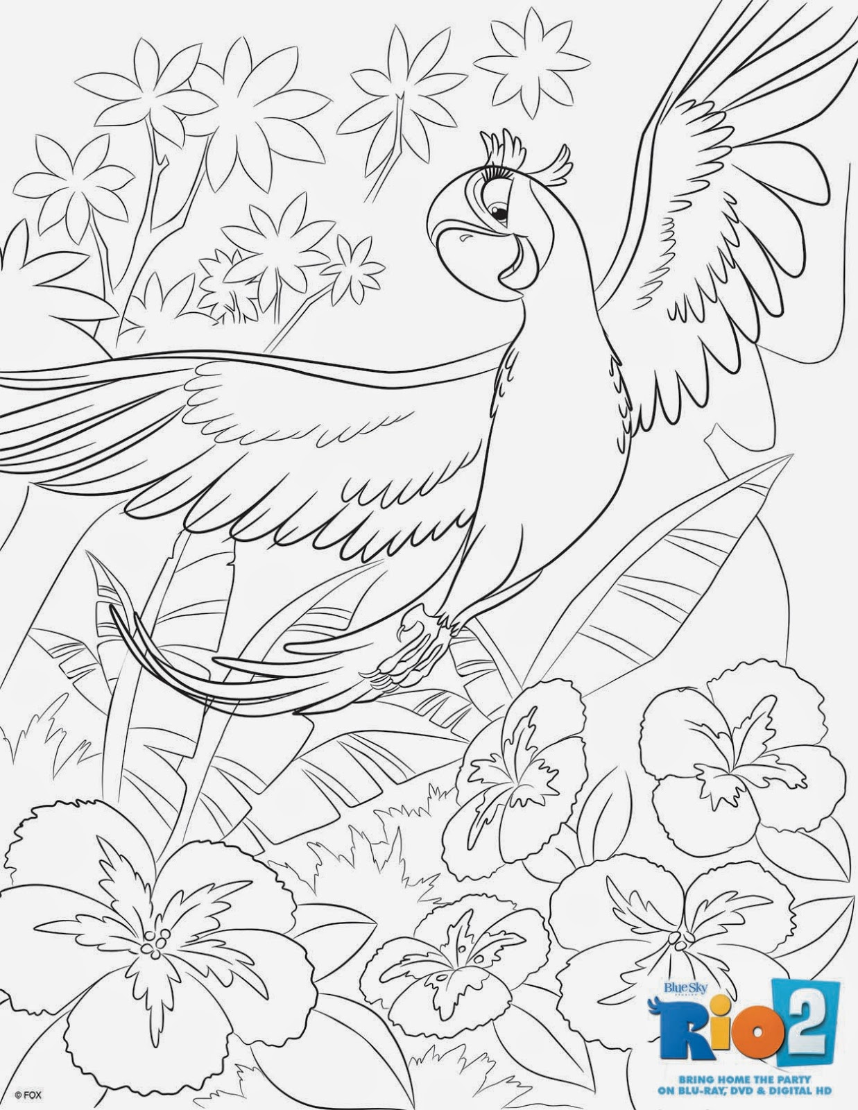 Flying Macaw Coloring Page Pics For Blue Macaw Coloring