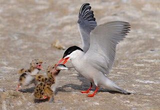 baby bird pictures