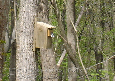 Image of a nuthatch head first down the front of a birdhouse.