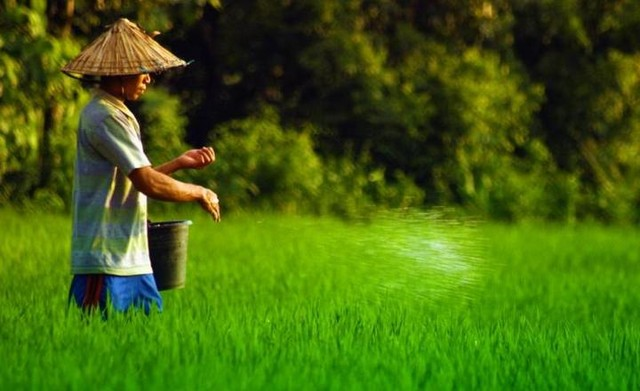 Belajar Pertanian Organik