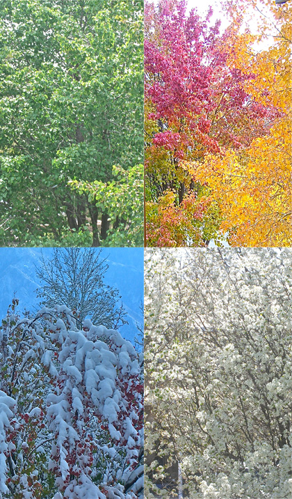 Summer, Fall, Winter, Spring, Seasons