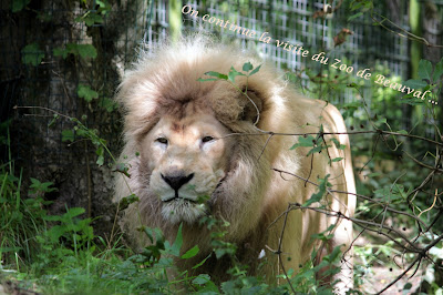 http://pocketfulofsweetness.blogspot.com/2015/10/photo-3-zoo-de-beauval-part2.html