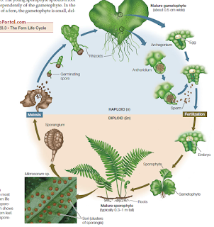 Venus flytrap diagram