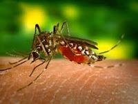 DHF ( Dengue Fever )