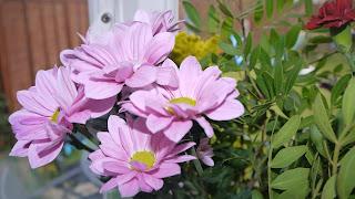 flower giving