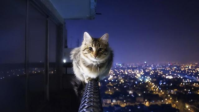 Γάτα στο μπαλκόνι - προστασία