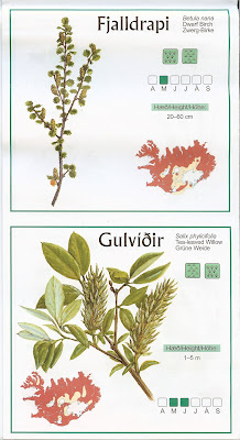Iceland Botanical Map Sample Map Section for Dwarf Birch (Betula nana)