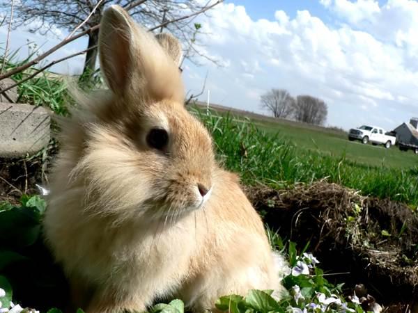 arnab-putih-di-padang-rumput