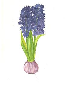 Giacinti ed aromaterapia il mio giardino fiorito - Giacinti in casa ...
