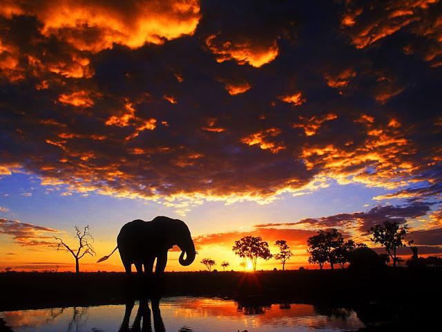 elephants,sunset, wallpapers, nature, desktop, HD, HQ, tapandaola111