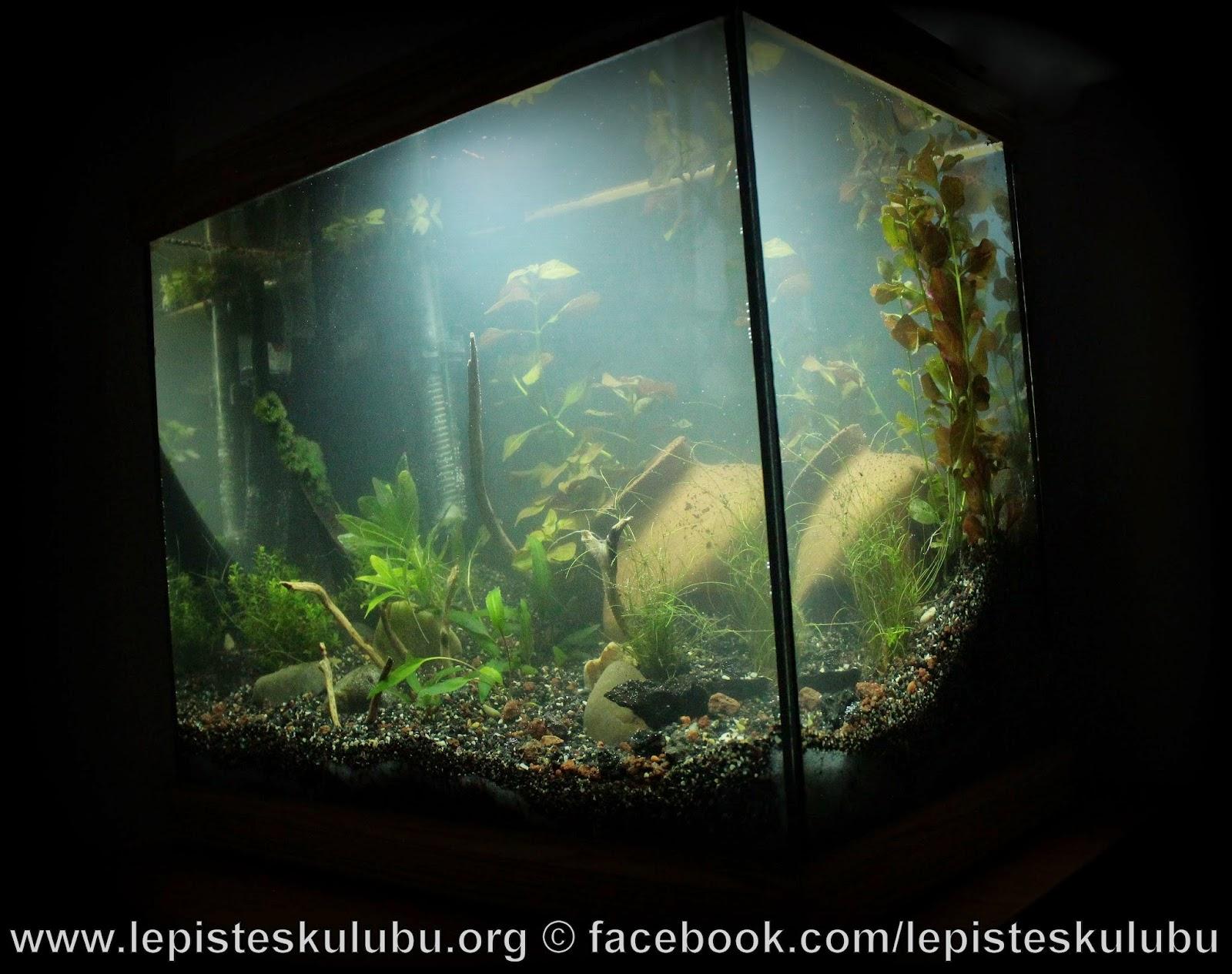http://1.bp.blogspot.com/-y1PE252_isk/VUkA3VRWctI/AAAAAAAAFeo/4yuwZi5fm-A/s1600/IMG_4539.JPG