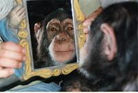 Viendose espejo