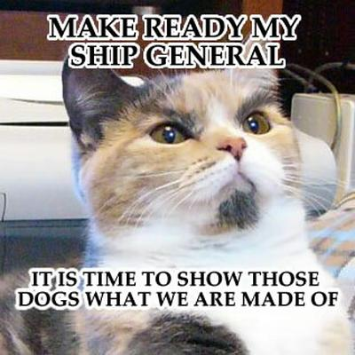 Funny Picture Clip The Rise Of Funny Cat Pictures