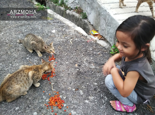 didik anak sayangi haiwan kucing, tips luang waktu bersama anak, aktiviti bersama anak-anak di waktu petang, peranan ibubapa sebagai pendidik,