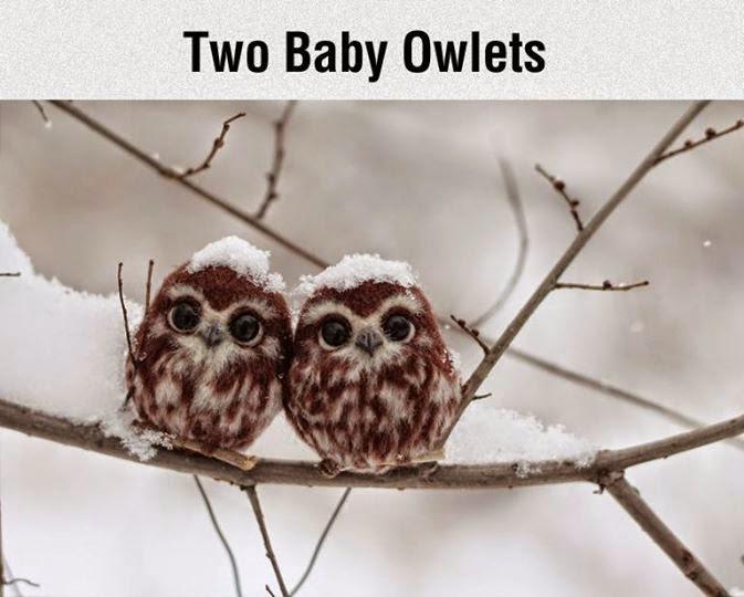 la reines blog wünscht Frohe Weihnachten - Baby Owls Winter